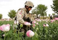 США хотят ввести в станы ЦА свой спецназ, под предлогом борьбы с наркотрафиком