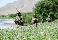 Талибан, НАТО и наркотики