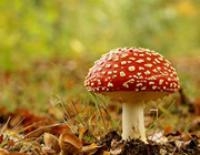О чём думают грибы?