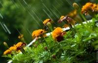 Дождь - одна из многочисленных Милостей Аллаха