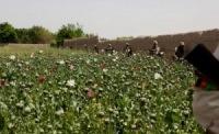 Талибан, НАТО и наркотики. На чьей стороне правда?