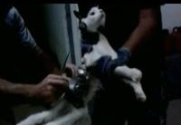 Кошка-сообщница для побега из тюрьмы