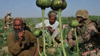 Афганистан обвинил РФ в отсутствии помощи в борьбе с наркомафией