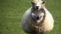 Евроислам — волк в овечьей шкуре