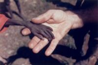 Турецких мусульман призвали помочь голодающим в Африке