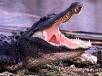 Издательство извинилось за крокодила с Кораном из книги «Мойдодыр»