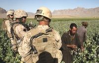 Афганский триумф американского наркобизнеса