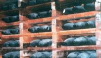 """""""Экспорт химических веществ в Сирию - бизнес без лицемерия"""""""