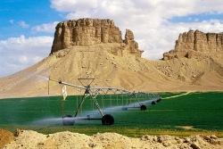 В Катаре проводятся эксперименты по озеленению пустынь