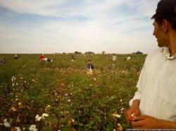 Фермерам Каркалпакстана, которые являются должниками по кредитам, запретили отказываться от земель и совершать суицидальные действия