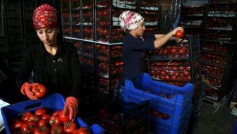 Турция окажет помощь компаниям, попавшим под российские санкции