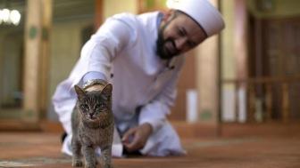В мечети Стамбула имам приютил кошек